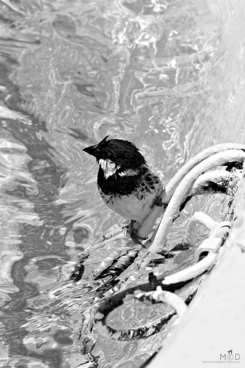 180629birds