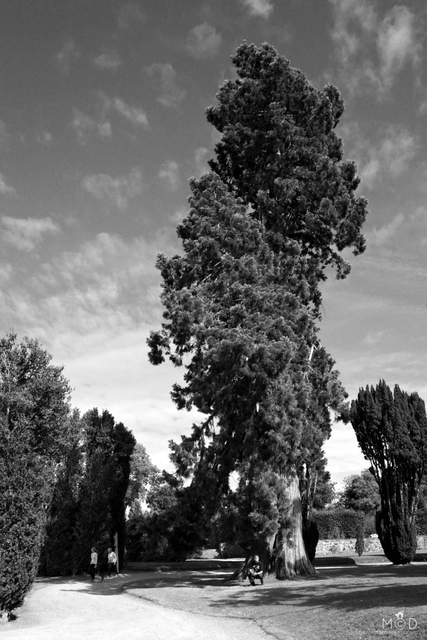 180921Trees2