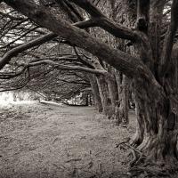 CB&W: Trees