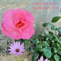 Flower heart beats smooth silky rhythm