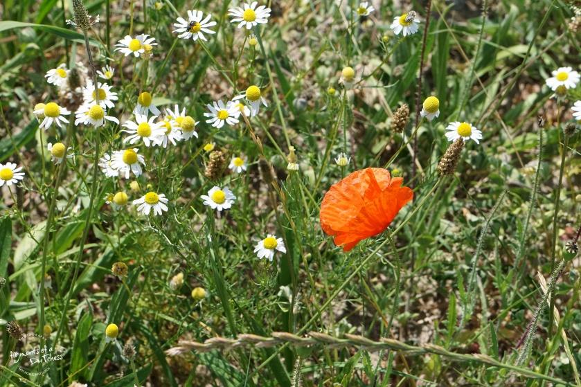 190807flower