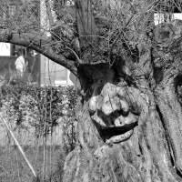 CBW: Tree Art comes alive