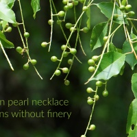 Vegan pearl necklace adorns without finery