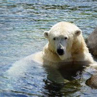 Polar bear Spa