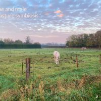 Horse and mole in pasture symbiosis