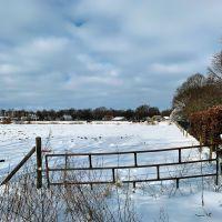 Dutch winter horses